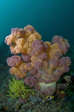 MME400042U