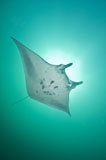 MME400101U
