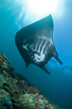 MME400102U