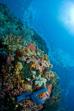 MME400165U