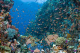 MME400166U