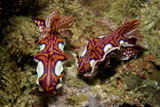 MME400322U