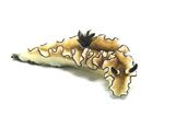 MME400332U