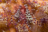 MME400335U