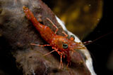 MME400339U