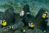 MME400340U
