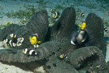 MME400341U