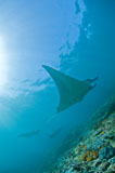 MME400345U