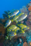 MME400350U