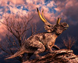 PHB600014P © Stocktrek Images, Inc. Diabloceratops was a ceratopsian dinosaur from the Cretaceous Period.