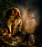 PHB600029P © Stocktrek Images, Inc. Sabre-toothed cat on the prowl.