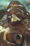 SJN400034U