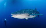 SJN400314U