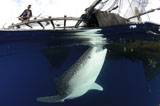 SJN400325U