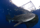 SJN400327U