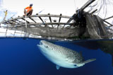SJN400330U
