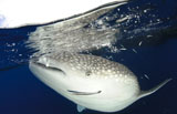 SJN400332U
