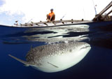SJN400333U
