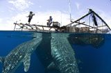 SJN400342U