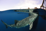 SJN400343U
