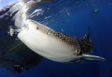 SJN400350U