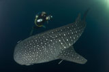 SJN400356U
