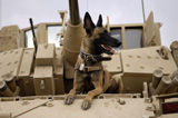 STK102260M
