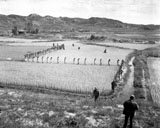 STK106000M © Stocktrek Images, Inc. North Korean prisoners march single file across a rice paddy.