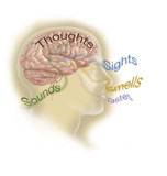 TRF700033H © Stocktrek Images, Inc. Representation of how our senses affect our thoughts.