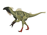 ADR600070P © Stocktrek Images, Inc. Beipiaosaurus feathered walking dinosaur.