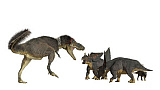 ADR600073P © Stocktrek Images, Inc. Daspletosaurus attacking a group of Chasmosaurus dinosaurs.