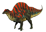 ADR600079P © Stocktrek Images, Inc. Ouranosaurus, a north African iguanodont with a tall spinal ridge along its back.