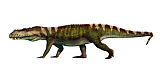 ADR600080P © Stocktrek Images, Inc. Prestosuchus archosaur from the middle Triassic.