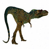 CFR200884P © Stocktrek Images, Inc. Albertosaurus dinosaur on white background.