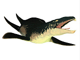 CFR200923P © Stocktrek Images, Inc. An extinct Liopleurodon reptile, white background.