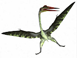 CFR200925P © Stocktrek Images, Inc. Quetzalcoatlus reptile on white background.