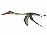 CFR200926P © Stocktrek Images, Inc. Quetzalcoatlus reptile flying, white background.