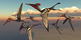 CFR200927P © Stocktrek Images, Inc. A flock of Pterodactylus pterosaurs flying in the sky.