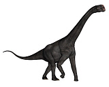 EDV600384P © Stocktrek Images, Inc. Brontomerus dinosaur walking, white background.