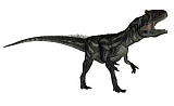 EDV600392P © Stocktrek Images, Inc. Allosaurus dinosaur roaring, white background.