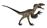 EDV600406P © Stocktrek Images, Inc. Deinonychus dinosaur isolated on white background.