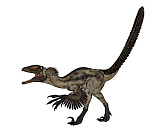EDV600407P © Stocktrek Images, Inc. Deinonychus dinosaur isolated on white background.