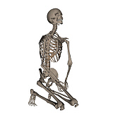 EDV700045H © Stocktrek Images, Inc. Human skeleton praying on his knees.