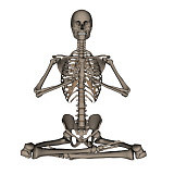EDV700046H © Stocktrek Images, Inc. Front view of human skeleton meditation.