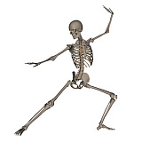 EDV700050H © Stocktrek Images, Inc. Front view of human skeleton in fighting stance.