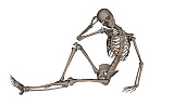EDV700051H © Stocktrek Images, Inc. Front view of a human skeleton posing.
