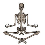EDV700052H © Stocktrek Images, Inc. Front view of human skeleton meditating.