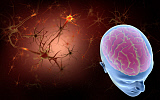 STK701185H © Stocktrek Images, Inc. Conceptual image of human brain with neurons.