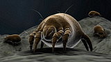 STK701204H © Stocktrek Images, Inc. Microscopic visualization of a dust mite.