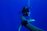 BBA400119U © Stocktrek Images, Inc. A diver has a close encounter with an oceanic whitetip shark.
